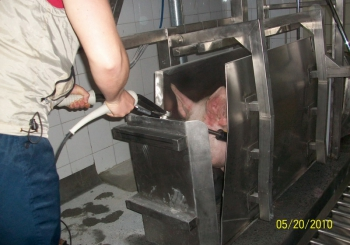 Бокс оглушения (глушения) крупного рогатого скота и свиней пневматический